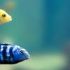 raley tropical fish